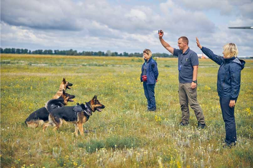 Obéissance canine et discipline elevage du bois blanc val