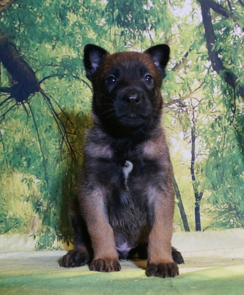 CHIOT MALE NIGHT 1