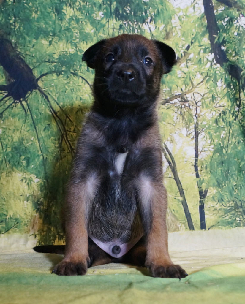 CHIOT MALE NIGHT 2