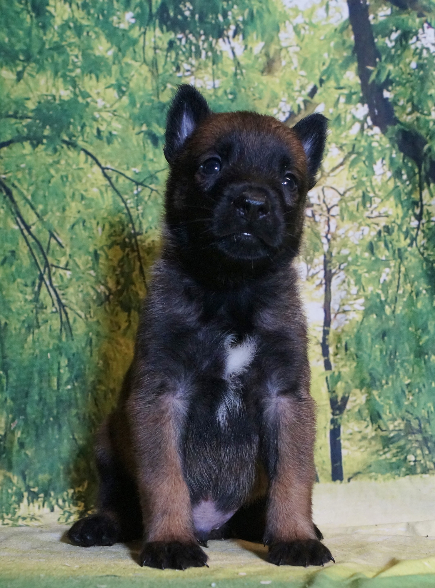 CHIOT MALE NIGHT 3