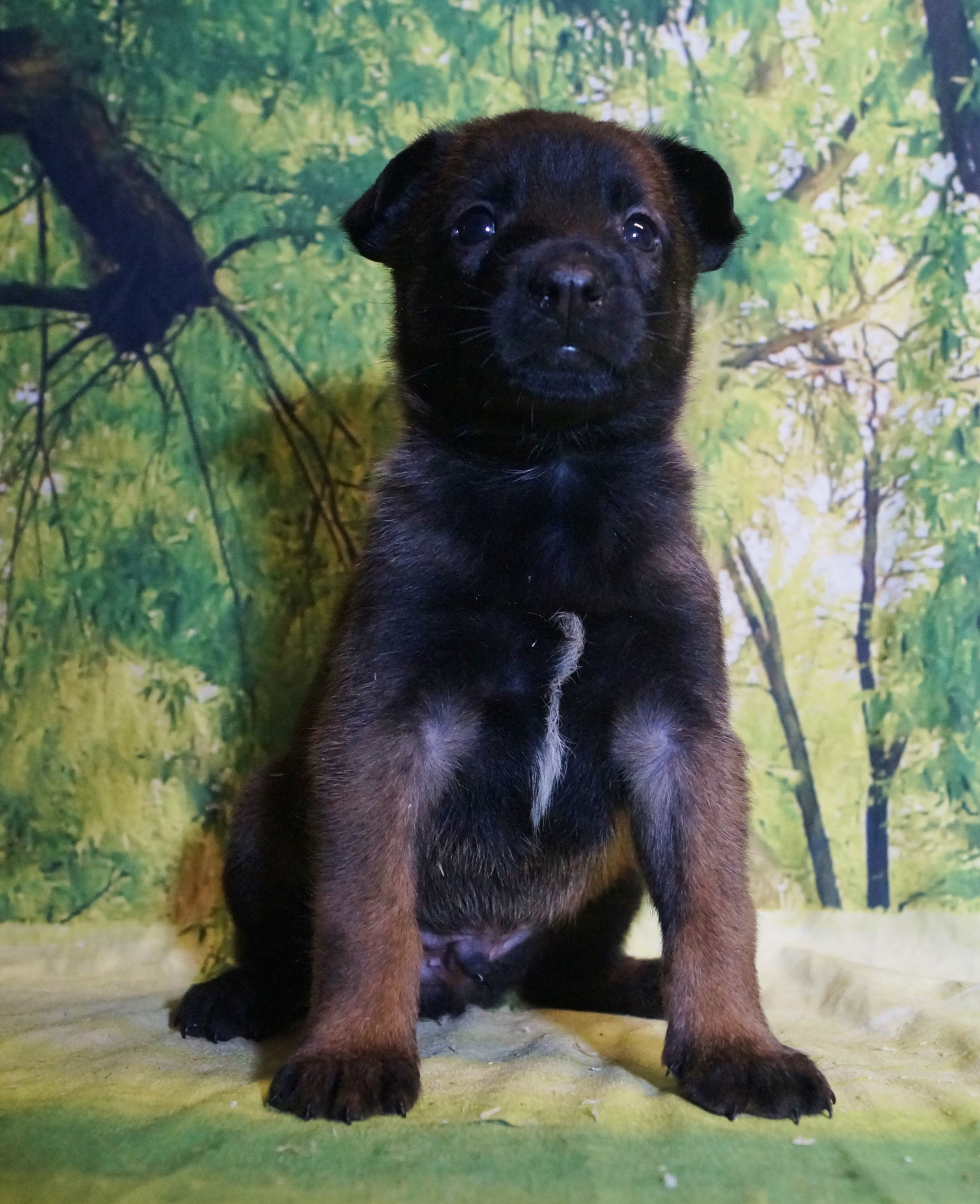 CHIOT MALE NIGHT 6